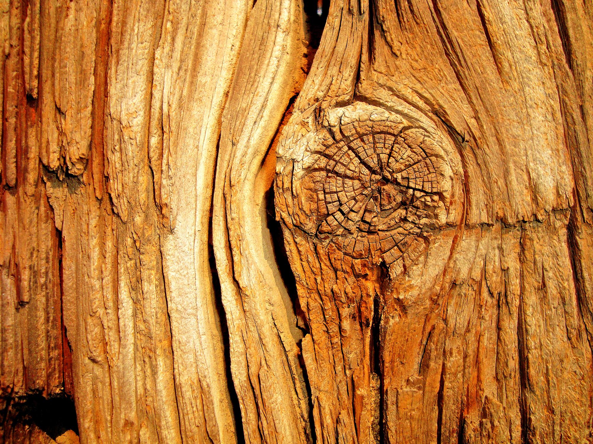 ako opraviť drevo