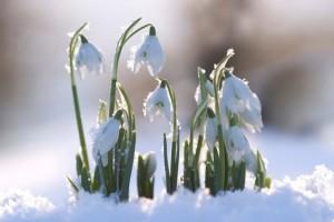 Jar sa blíži, hurá do záhrady! A čo v nej?
